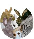Heritage Rabbits