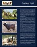 Heritage Goats