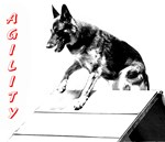 german shepherd agility aframe