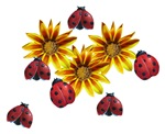Ladybug Party Gifts and T-Shirts