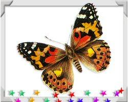 Butterfly Beauty on Captivating Nature Gifts!