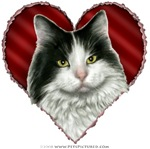 Long-Haired White & Black Cat Valentine