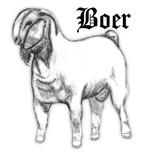 Full Boer