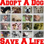 Save Homeless Animals