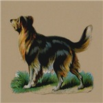 Scottish Collie Raphael Tucks & Son 1880