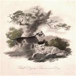 Bull Dog and Pomeranian James Tookey 1805 Digitall