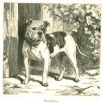 The Bulldog 1887 Digitally Remastered