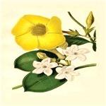 Botanical Print Stove Plant 1850 Remastered