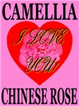 Camellia Chinese Rose I Love You