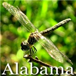 Alabama Dragonfly