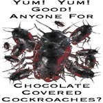 Chocolate Covered Cockroaches 2008 Edition