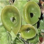 Lichen Goblets