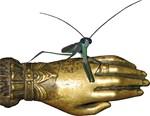 Pet mantis
