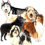 Breeds starting with S