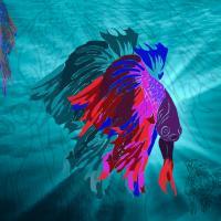 4 Elements: Water-Betta Fish