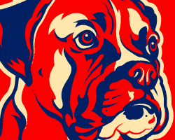 Obey the BOXER! USA