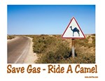 Save Gas Ride A Camel