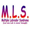 Multiple Labrador Syndrome