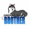 Black Siberian Husky Brother