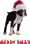 Boston Terrier Merry Christmas T-Shirts