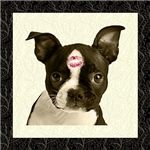 Boston Terrier Kiss T-Shirts