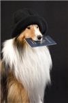 Sheltie with Passport