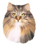 Maine Coon Oil Painting