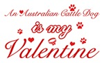 An Australian Cattle Dog is my valenti