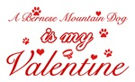 A Bernese Mountain is my valentines