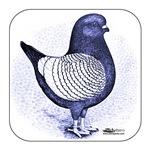 Argent Modena Pigeon