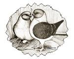 Modenas Gazzi Pigeons