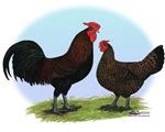 Redcap Fowl