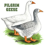 Pilgrim Geese2