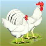 Leghorn Chickens White