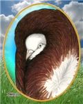 Opal Jacobin Pigeon