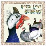 Gotta Love Guineas