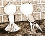 Voorburg Pigeon Pair