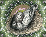Nesting Pigeons Decorative