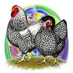 Easter Egg Wyandottes