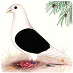 Saddle Homing Pigeon