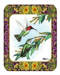 Hummingbirds and Flowers #4
