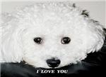 I LOVE YOU BICHON