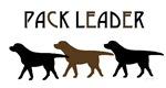 Labrador Retriever Pack Leader - BC