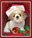 Shih Tzu Puppy Santa Paws