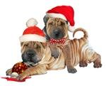 Shar-Pei Brothers Christmas