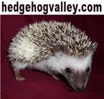 hedgehogvalley.com