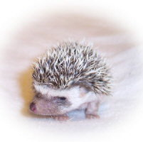 Peppy the Hedgehog