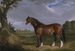 Vintage Painting of Clydesdale Stallion