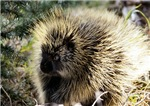 Prickly Subject
