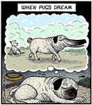When Pugs dream